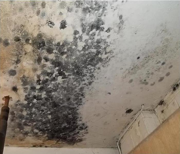 Mold Remediation Does Your San Gabriel Valley Home Have A Mold Problem?